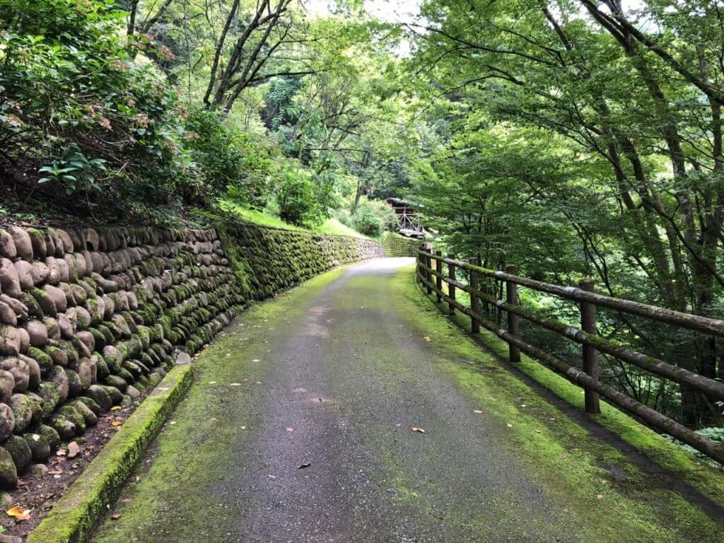 ケビンサイトへの道の自然